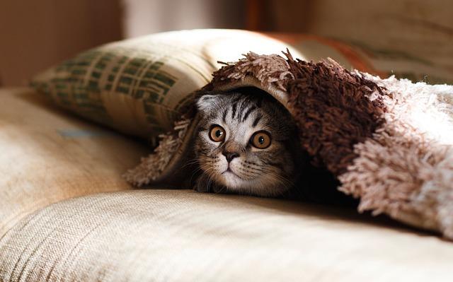 枕の理想の高さはどうやって決まる?調整時は横向きでの判断も!