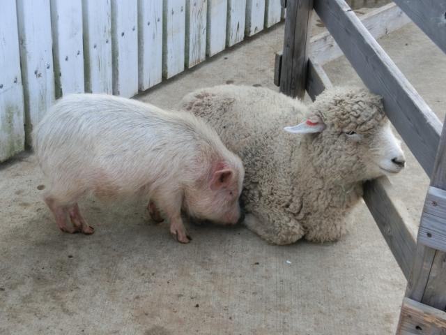 豚毛ブラシは水につけると獣臭がする?