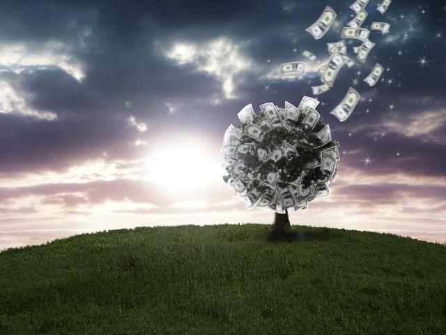 金のなる木を育てて13年!貧乏なのか金持ちになったのか?
