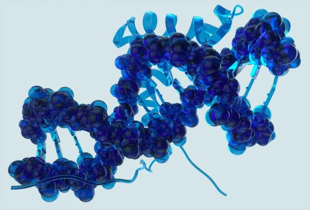 基礎代謝は遺伝が原因?
