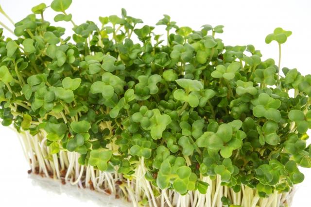 ブロッコリースプラウトの栄養素について