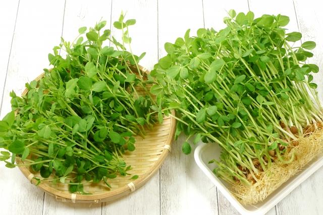 豆苗の栄養素について