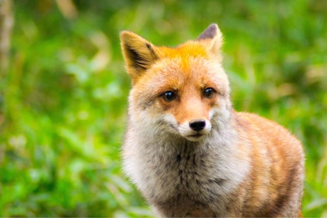 「狐の嫁入り」あらすじ