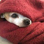 電気毛布の電磁波は体に影響がある説は嘘か本当か?!